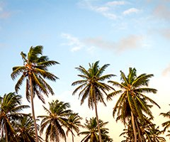 Event Thumbnail - 240 x 200 - Cayman.jpg